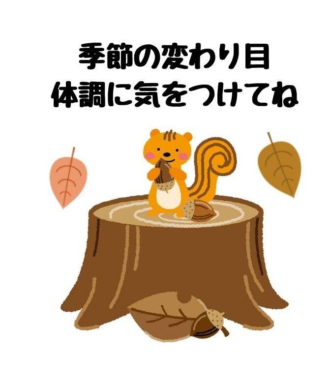 無料LINEスタンプ【秋】かわいい無料LINEスタンプ「リス」